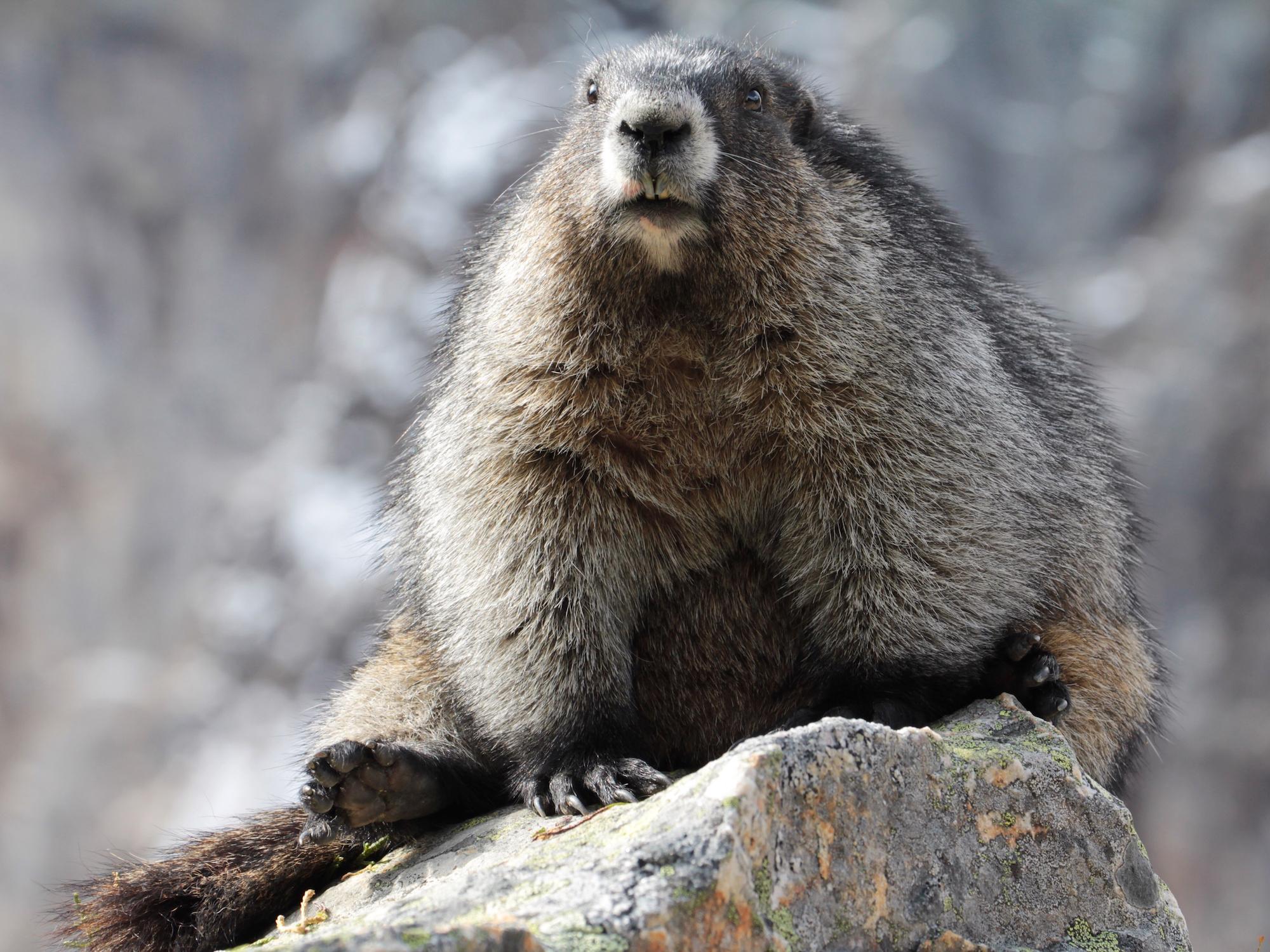 beaver-in-bar.jpg