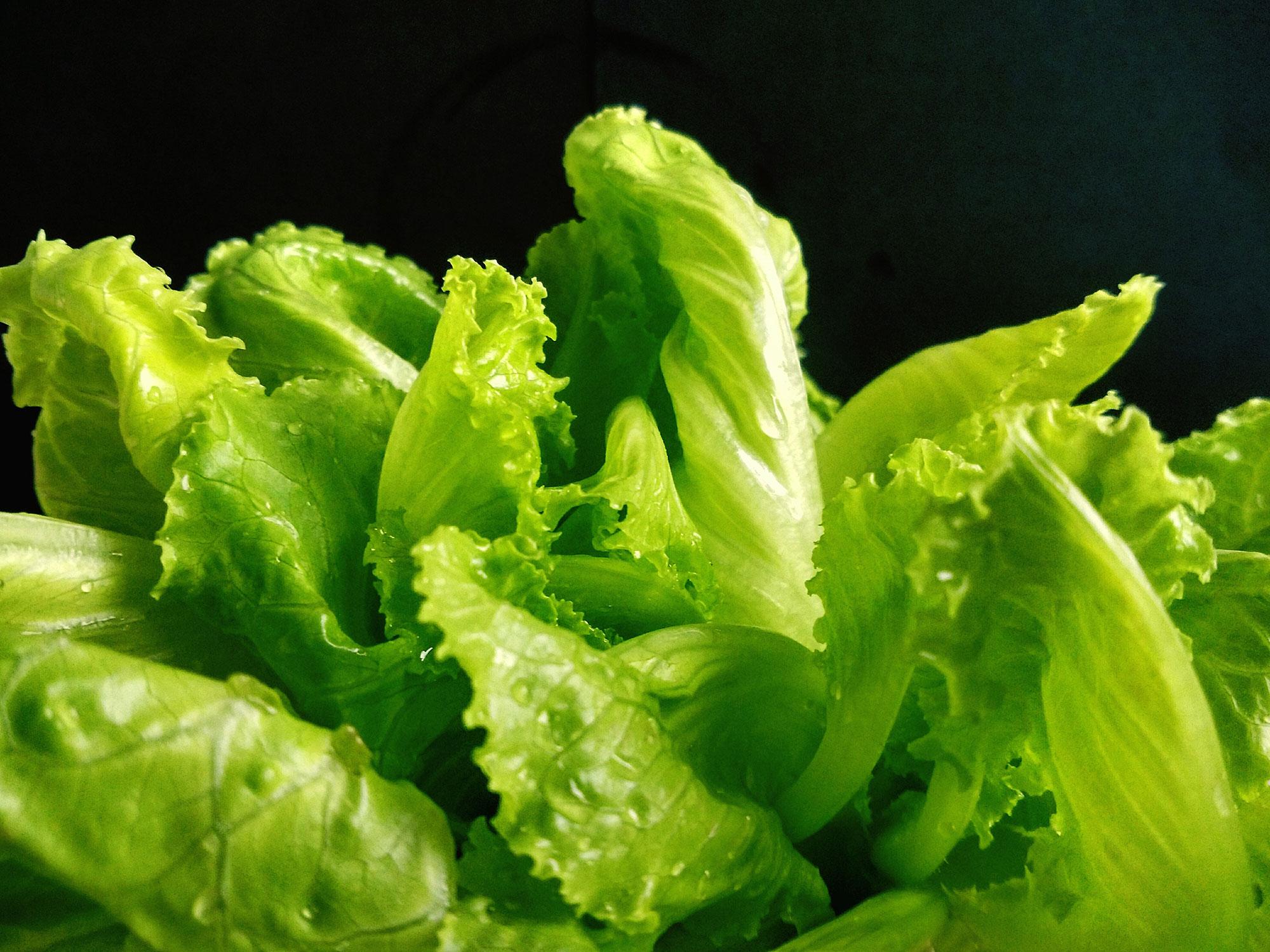 lettuce-hero.jpg