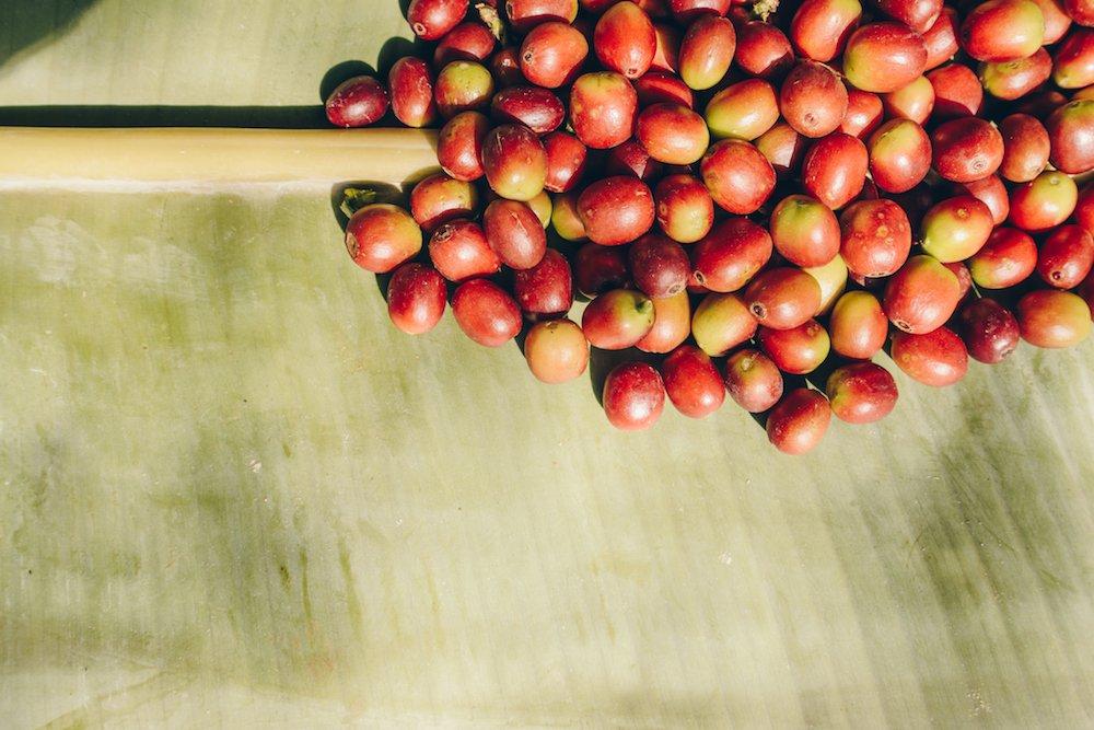 Cherry coffee beans on Banana leaf.