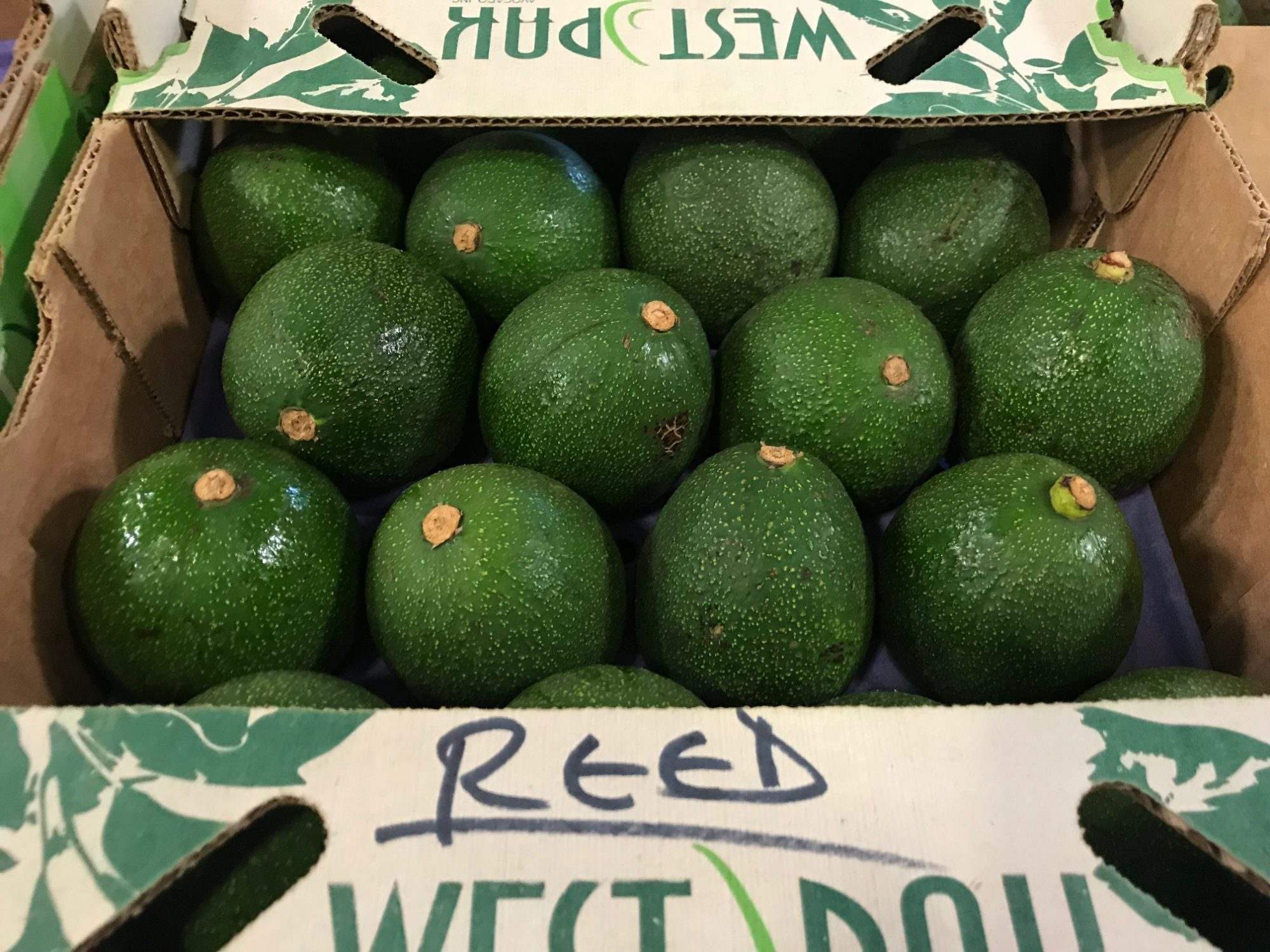 Meet the Reed Avocado, Hass's Rounder and Creamier Cousin