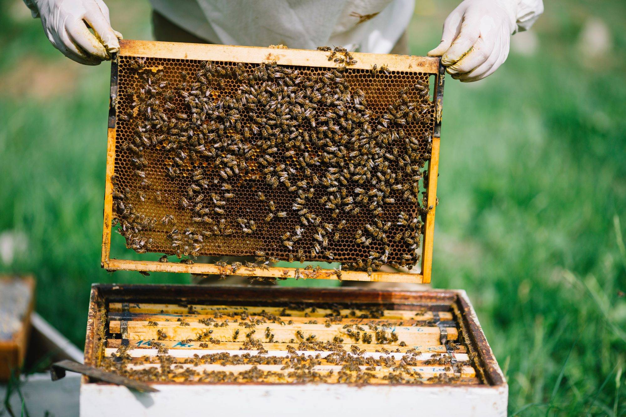 mr- beekeeping