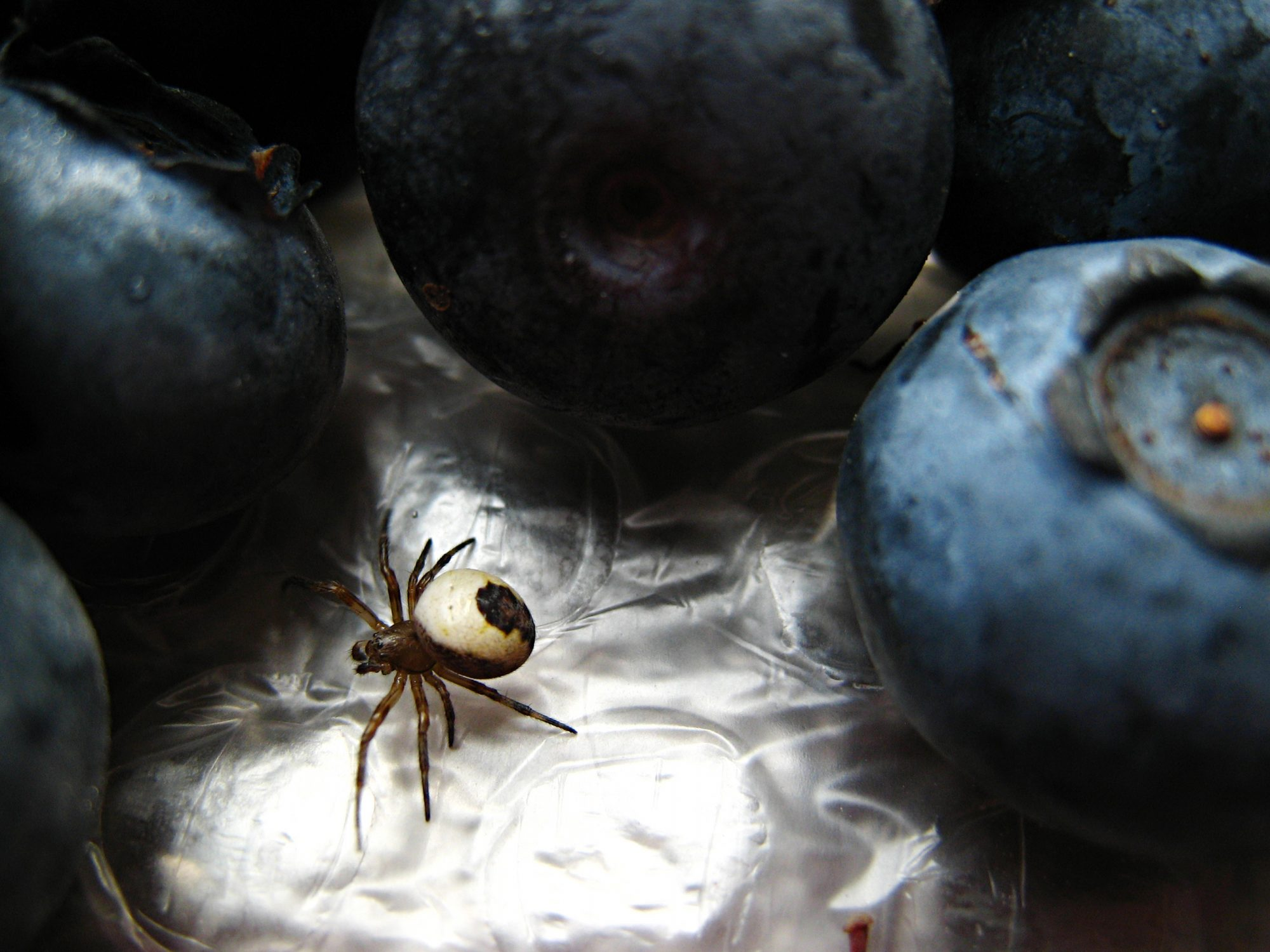 The Reason People Keep Finding Spiders in Fruit—Turns out It's a Good Thing