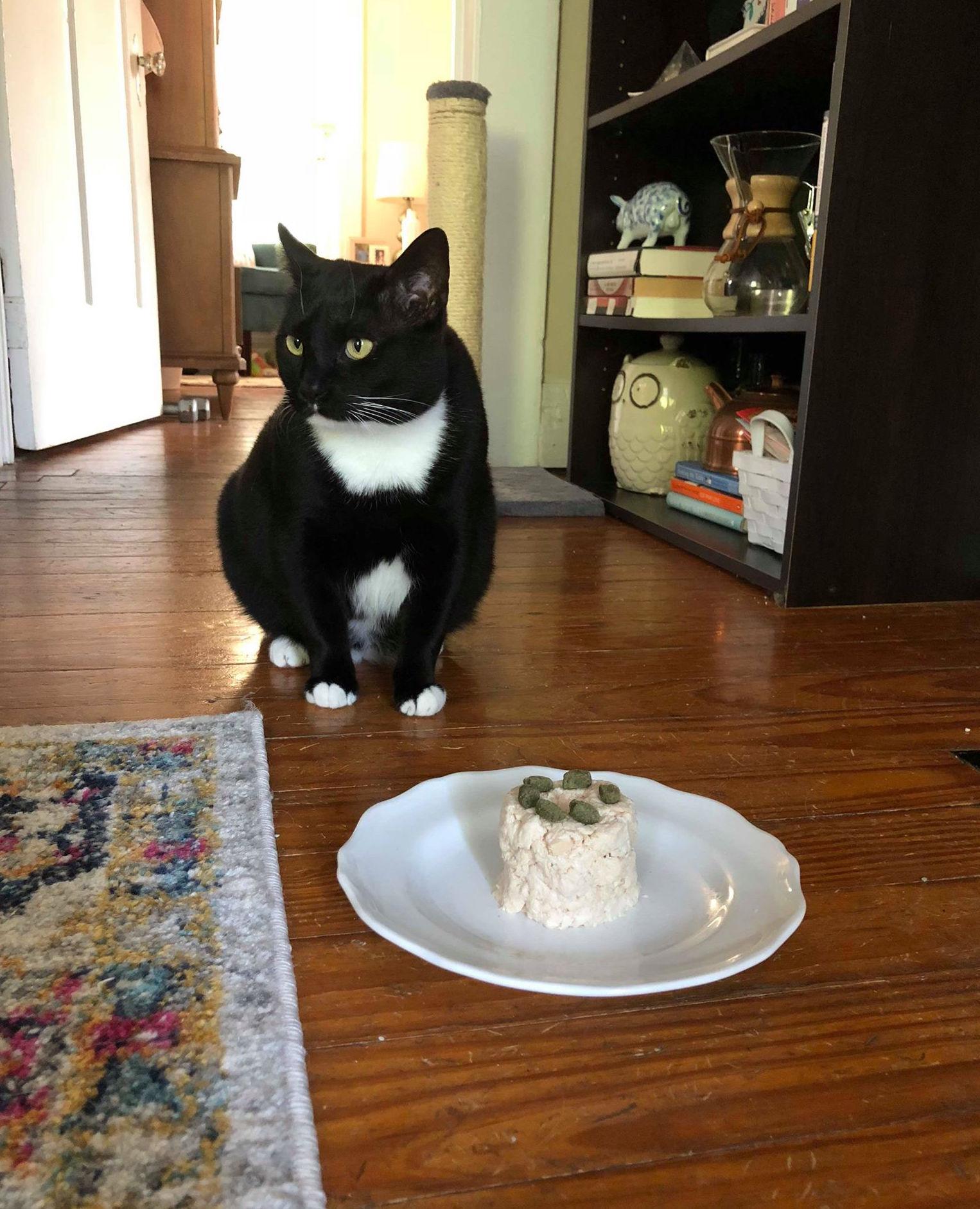 Cat-Friendly Birthday Cake Image