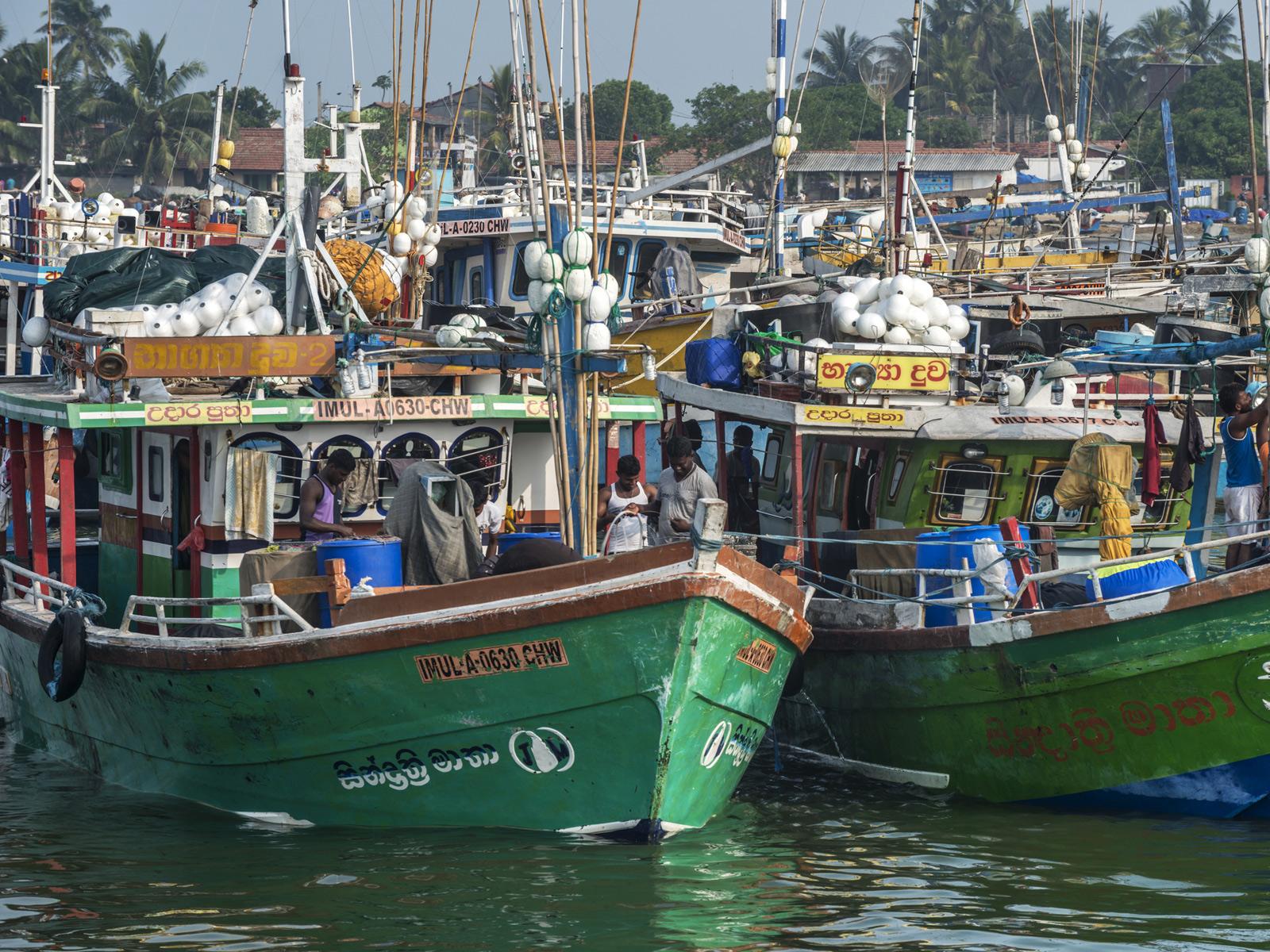fish-market-sri-lanka.jpg