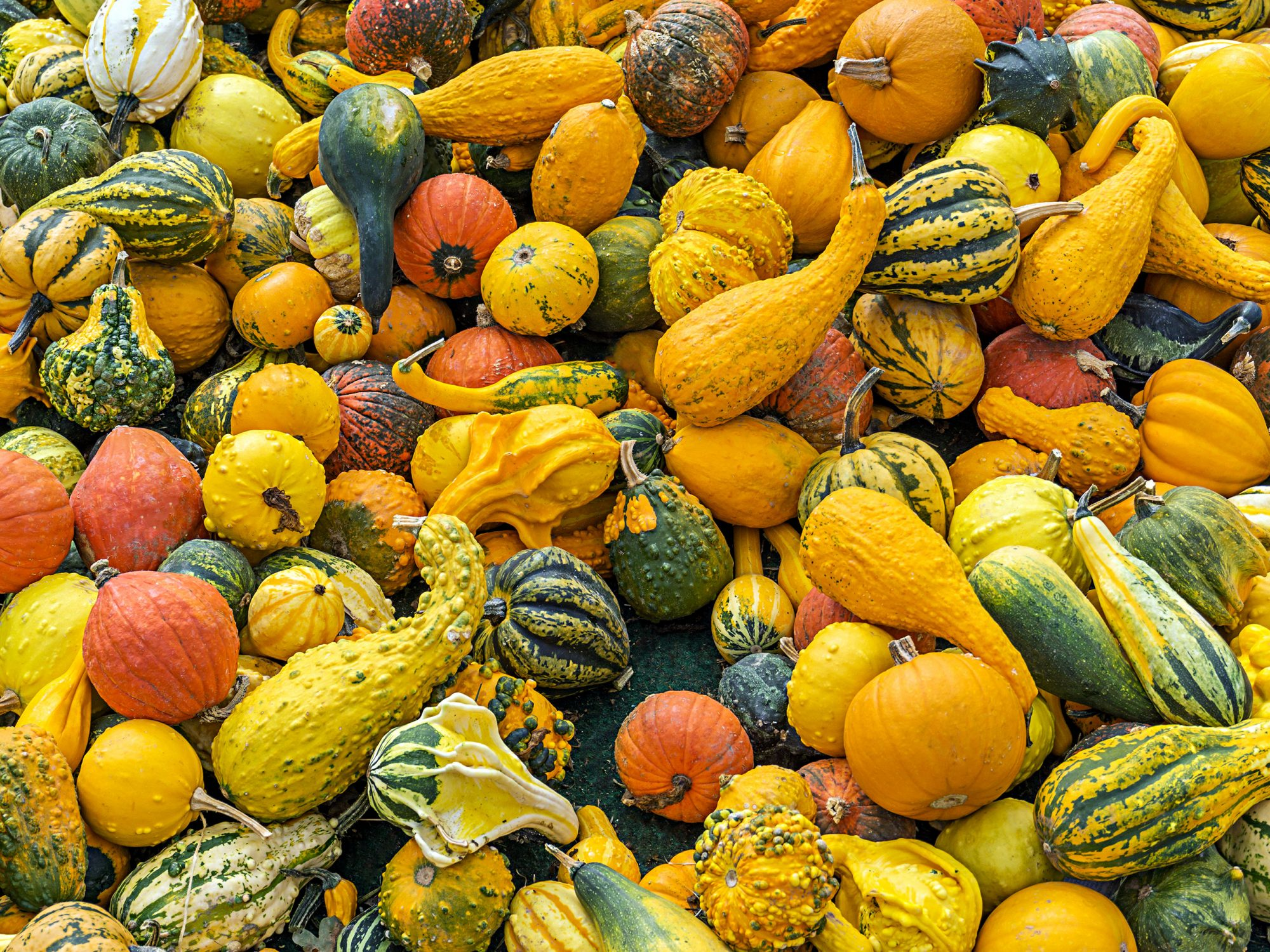 Can You Eat The Skin on All Types of Squash? | MyRecipes