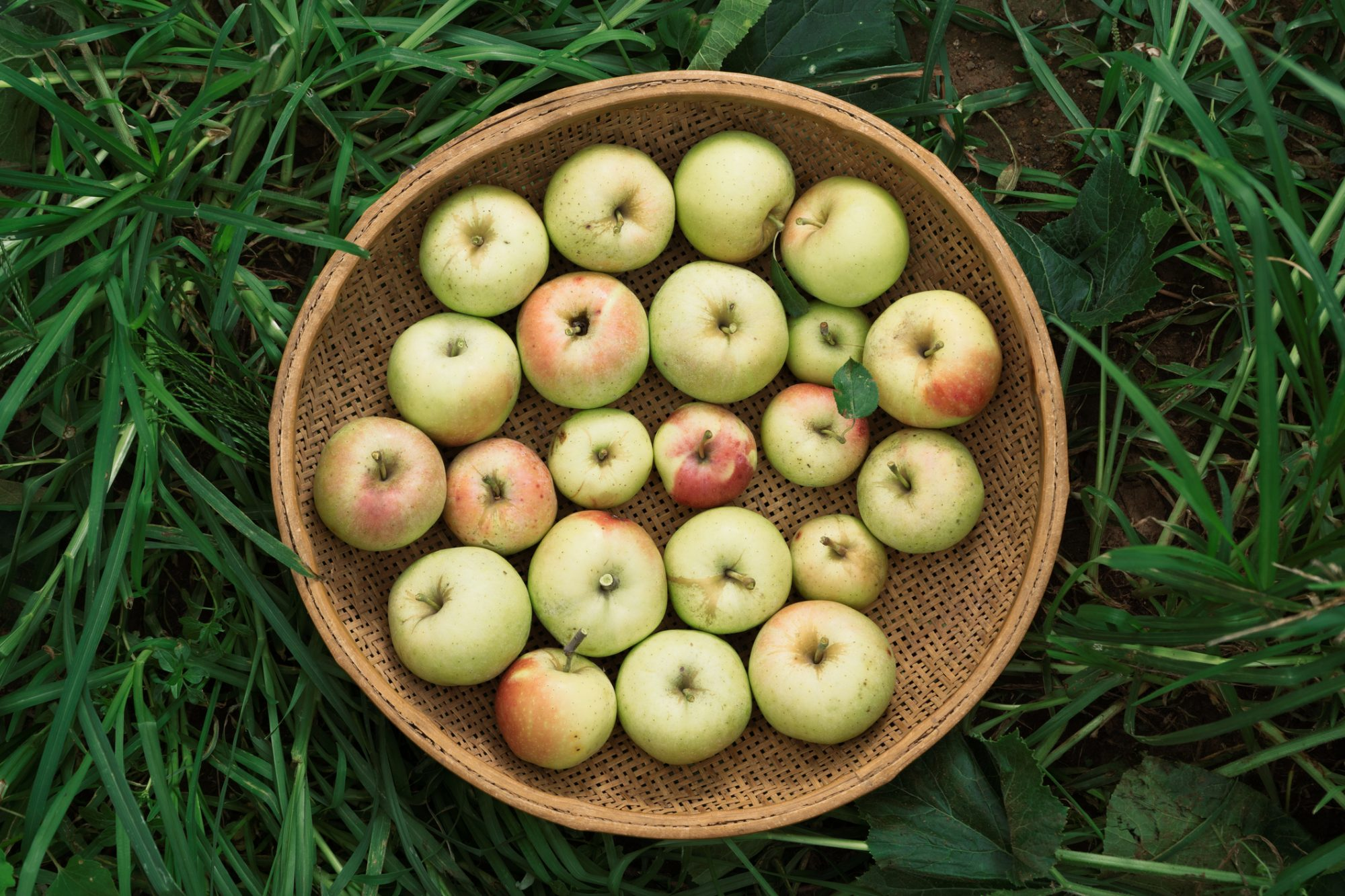 We Tried 19 Different Kinds of Apples and This Is the Best One