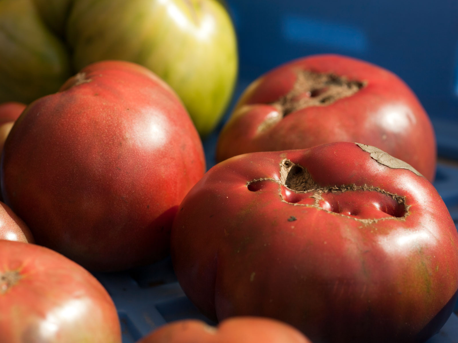 Kroger Launches Ugly Produce Program