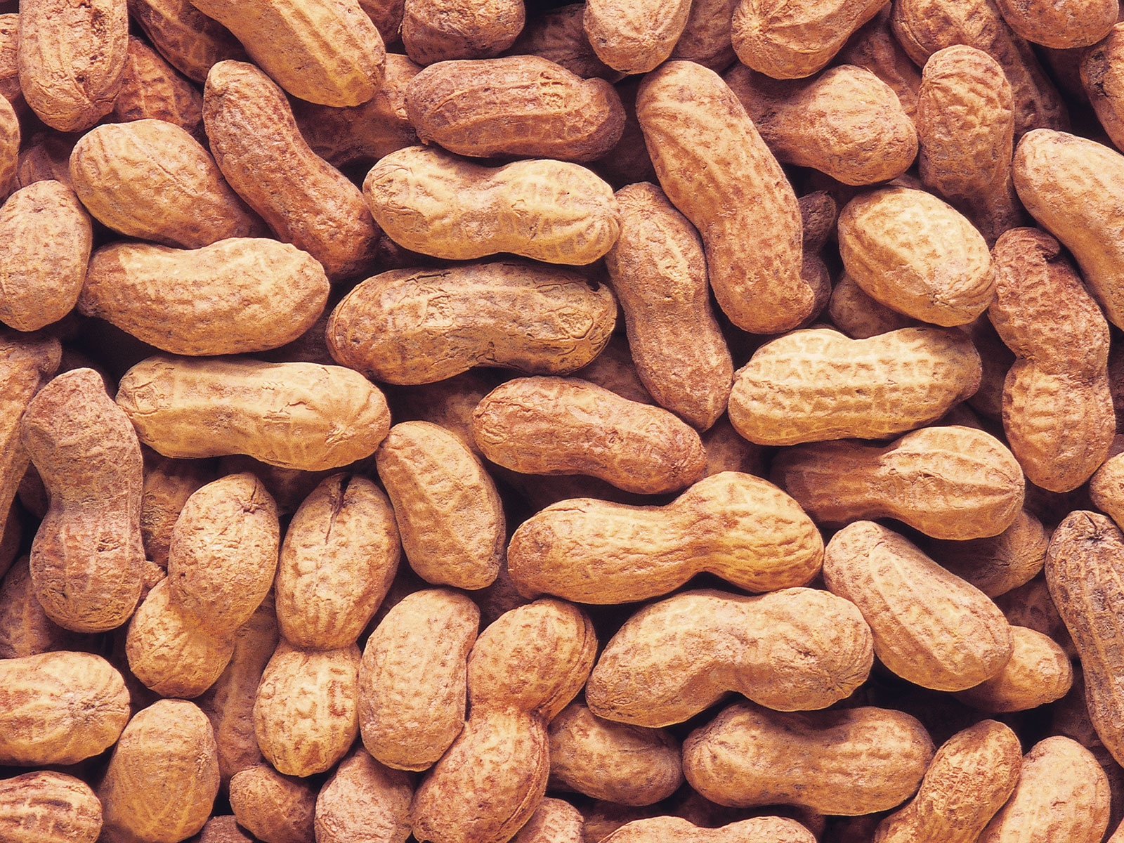 peanut allergy cure