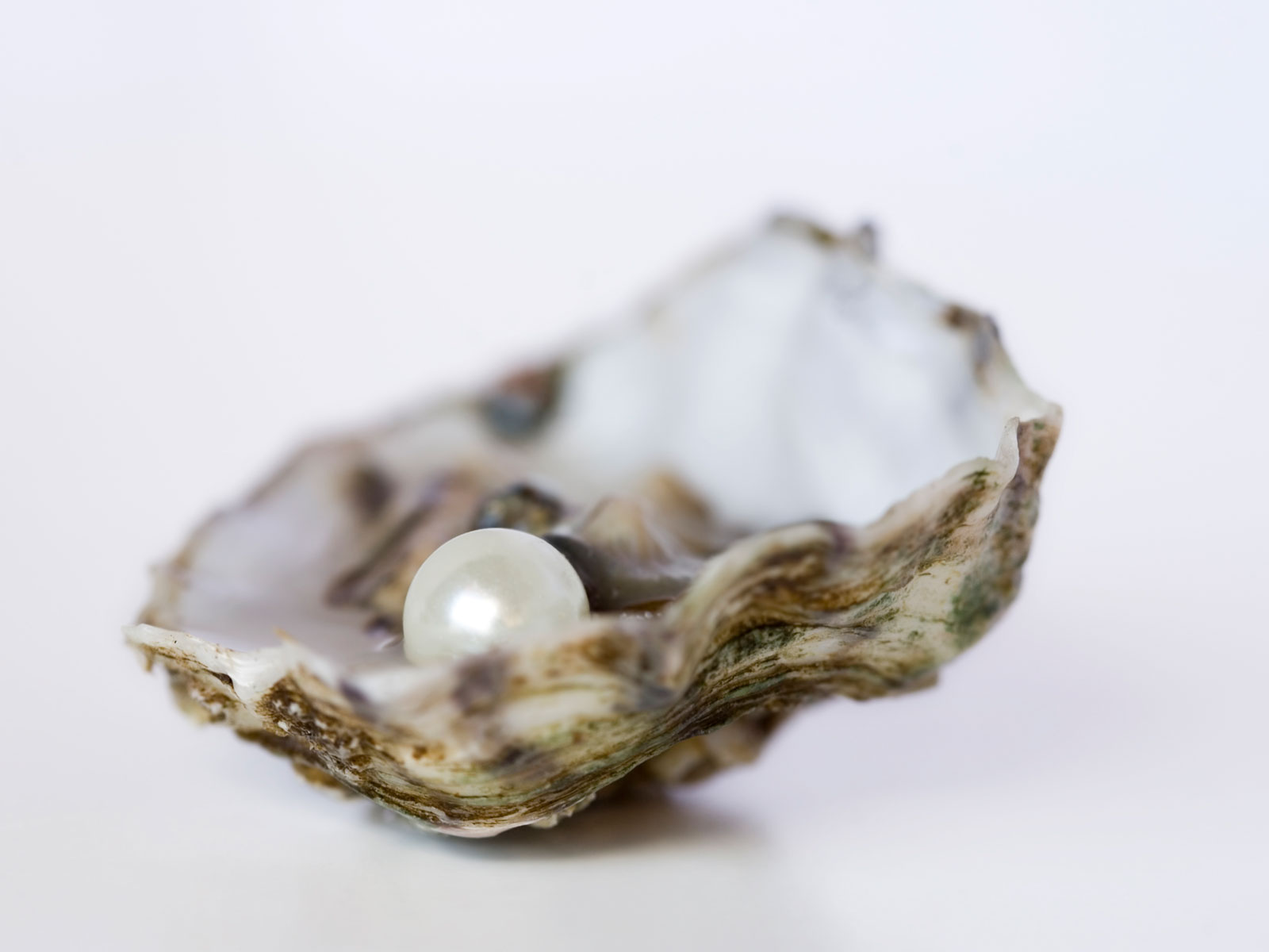 Diner Finds Pearl Worth as Much as $4,000 at Grand Central Oyster Bar