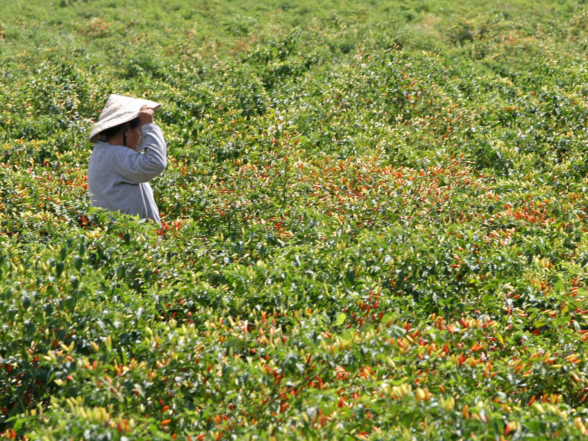 tabasco-worker.jpg