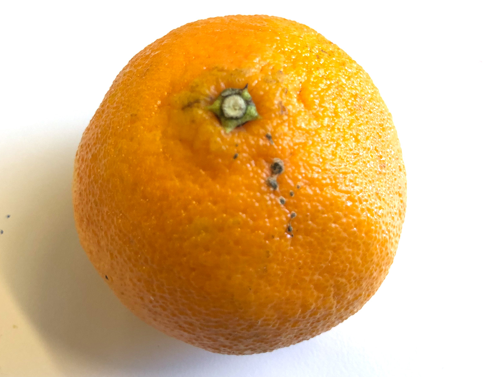 seald-sweet-clementine.jpg