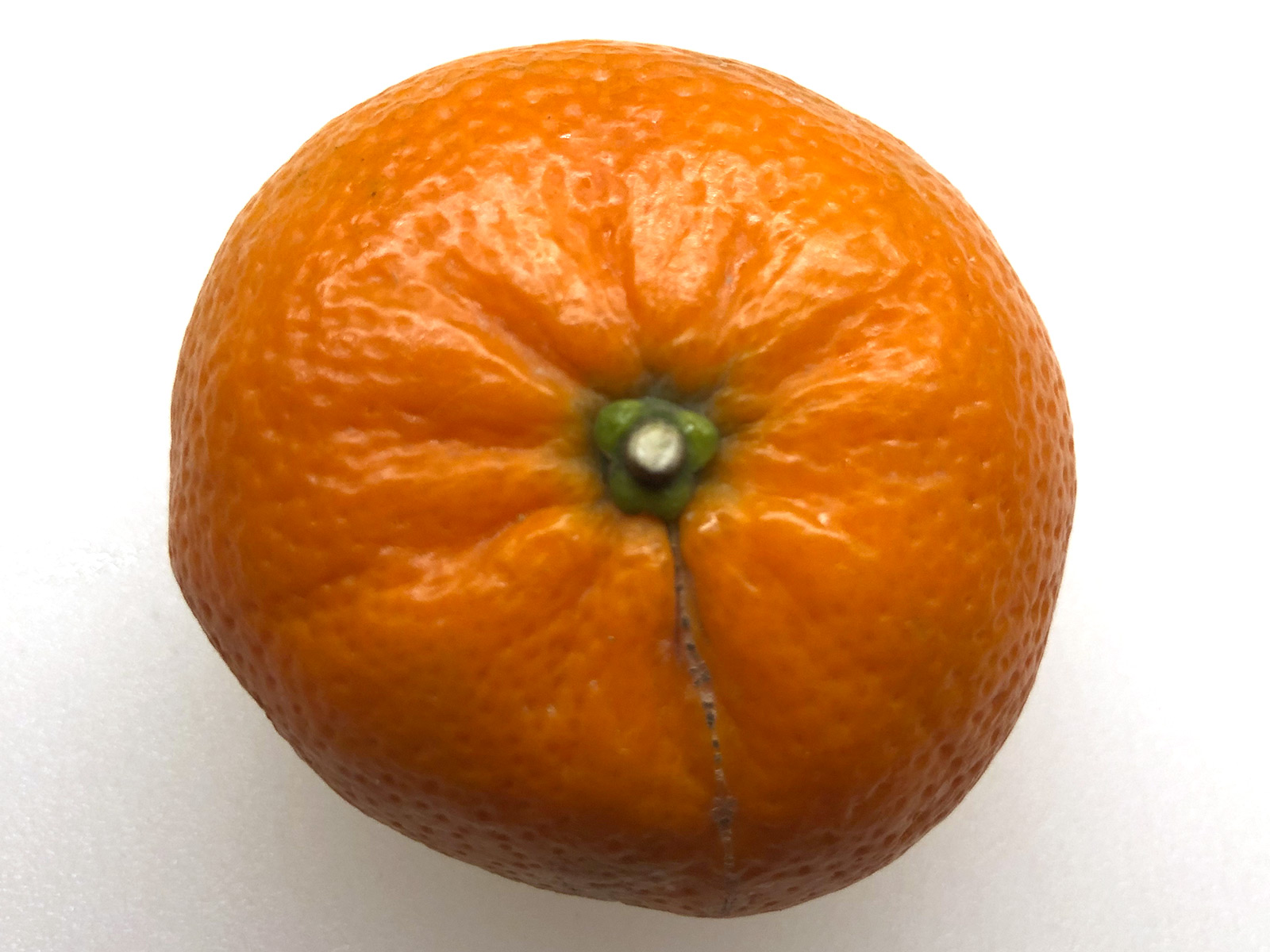 seven-seas-clementine.jpg