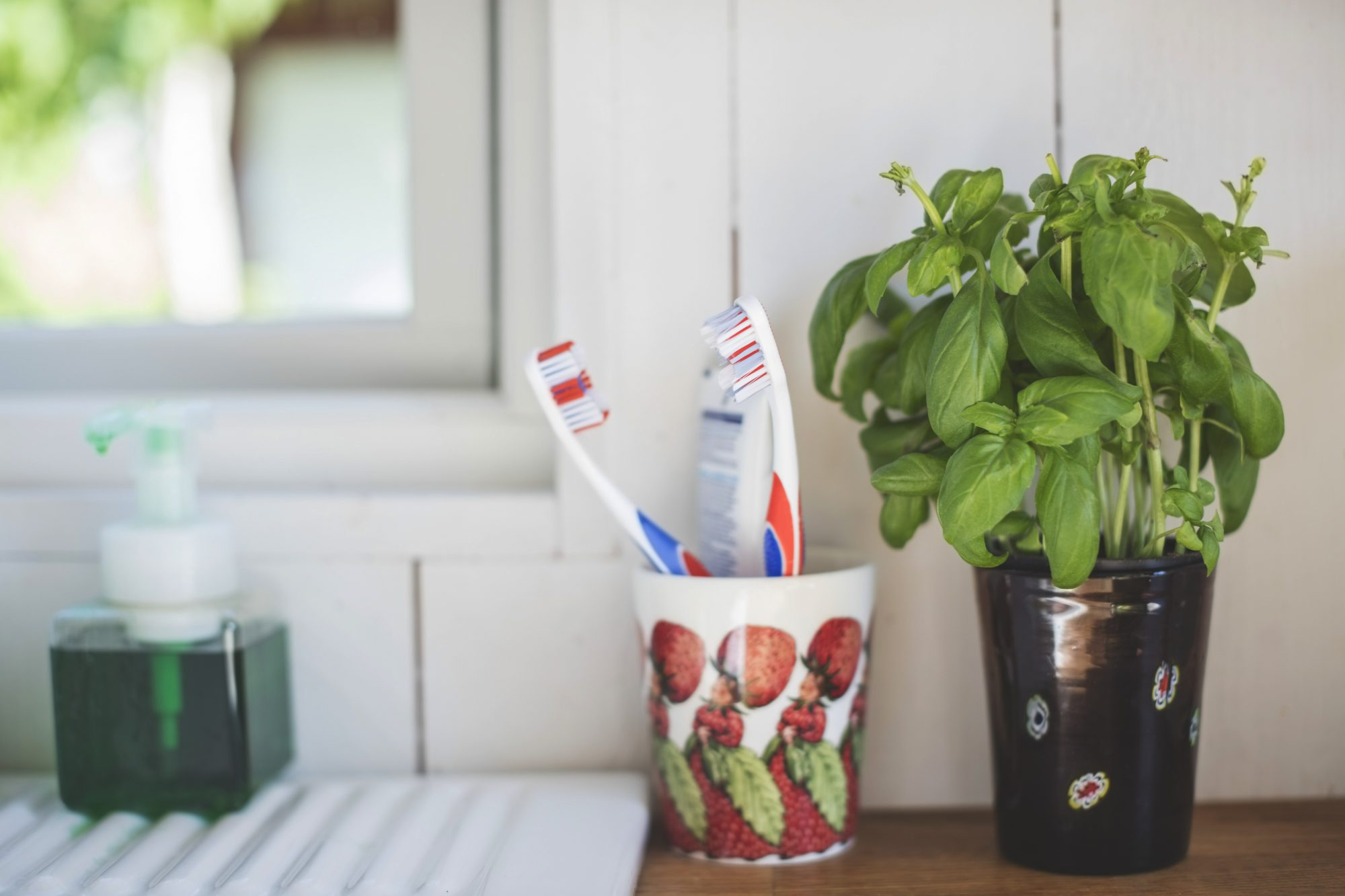 I Grew Herbs in My Bathroom And You Should Too