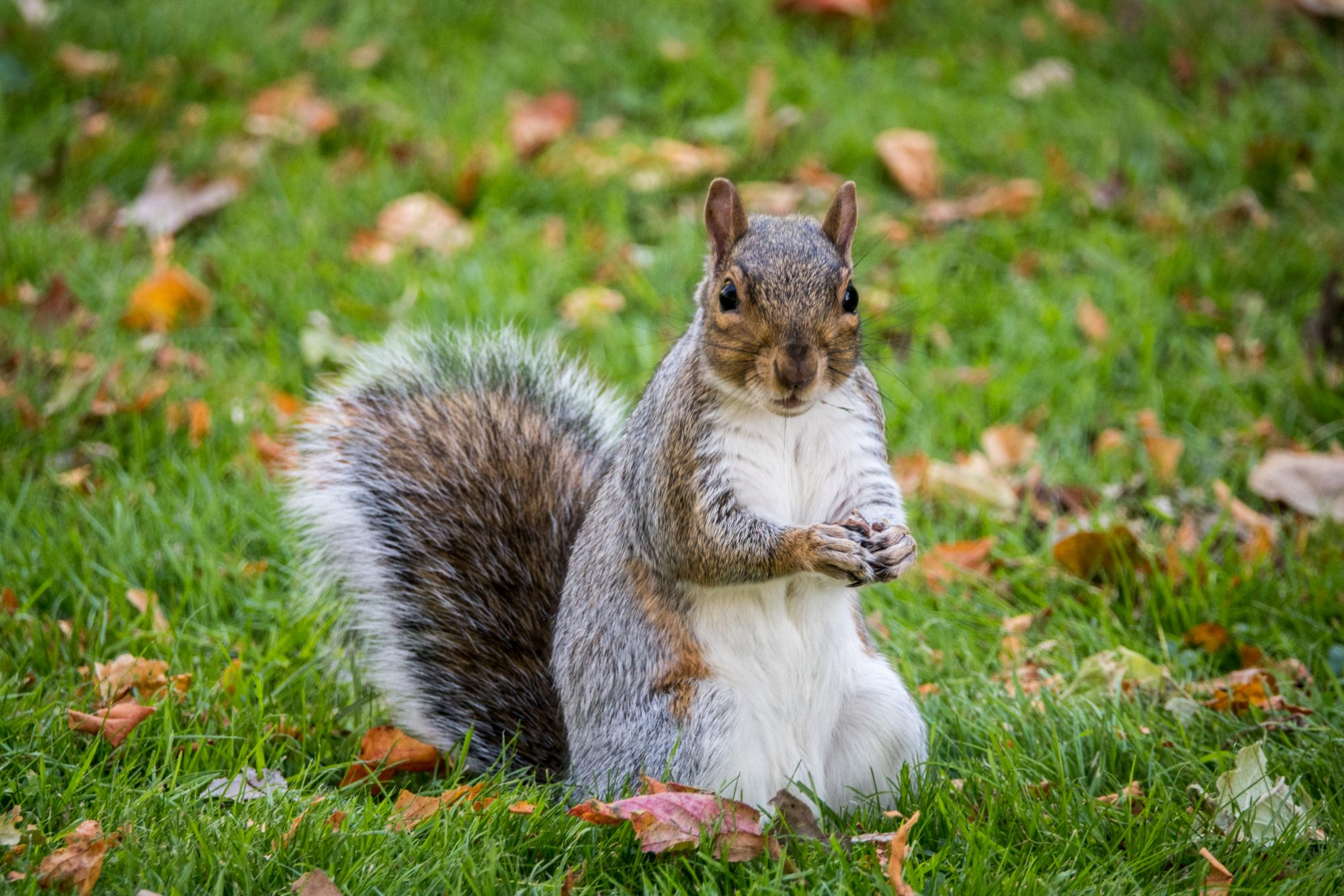 Should We Be Eating More Squirrel Meat? Some Chefs Think So.