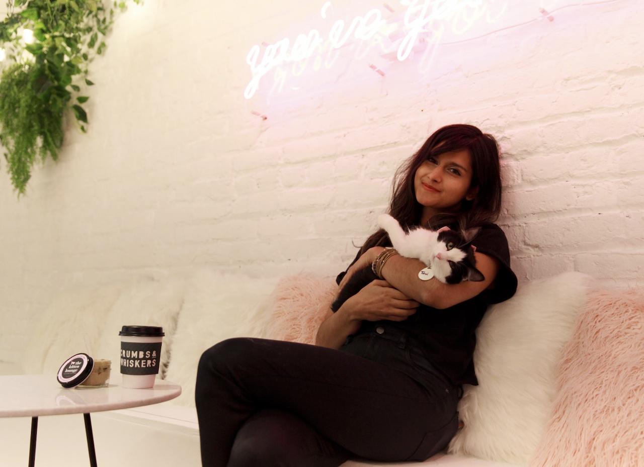 kitten lounge 6