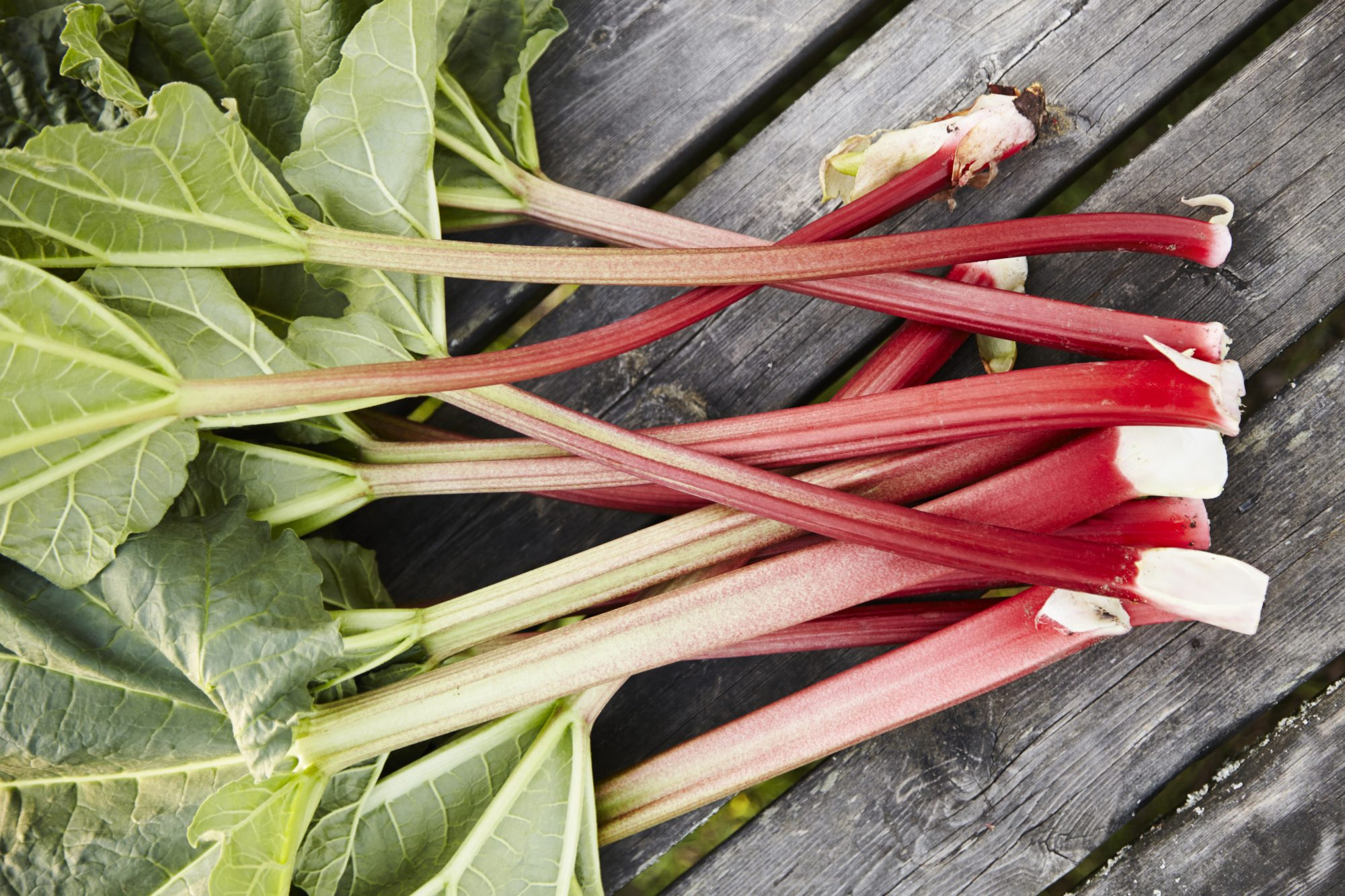 Image result for Rhubarb