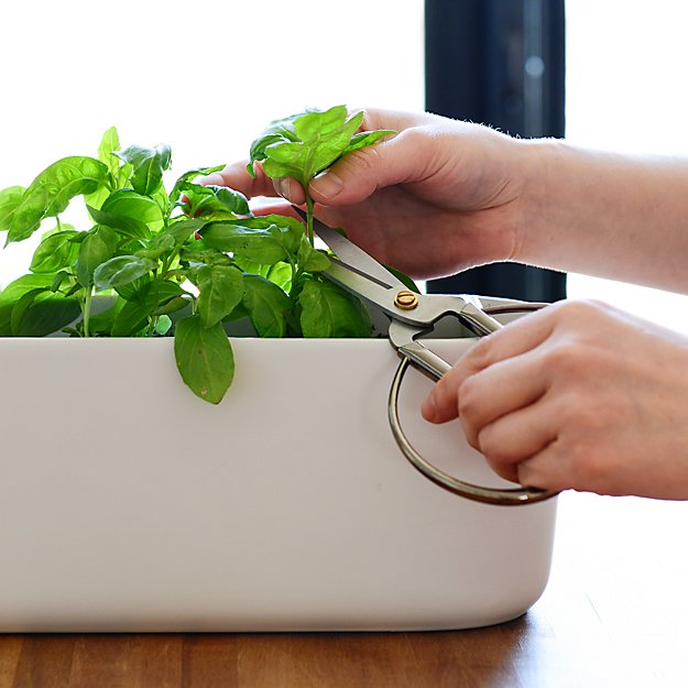 planter gift guide
