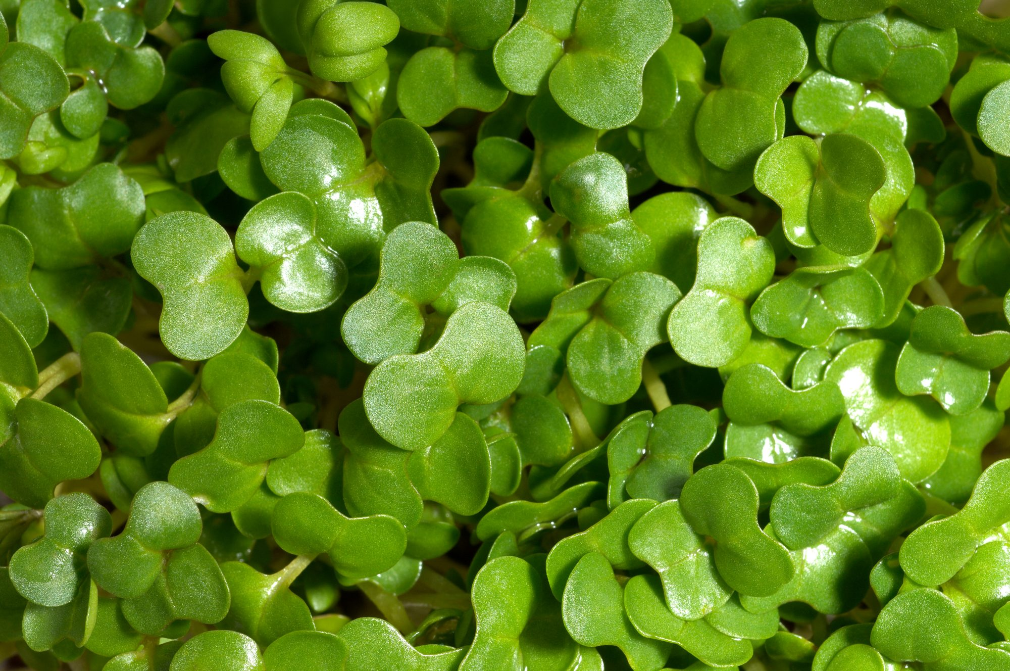 gettywatercress.jpg