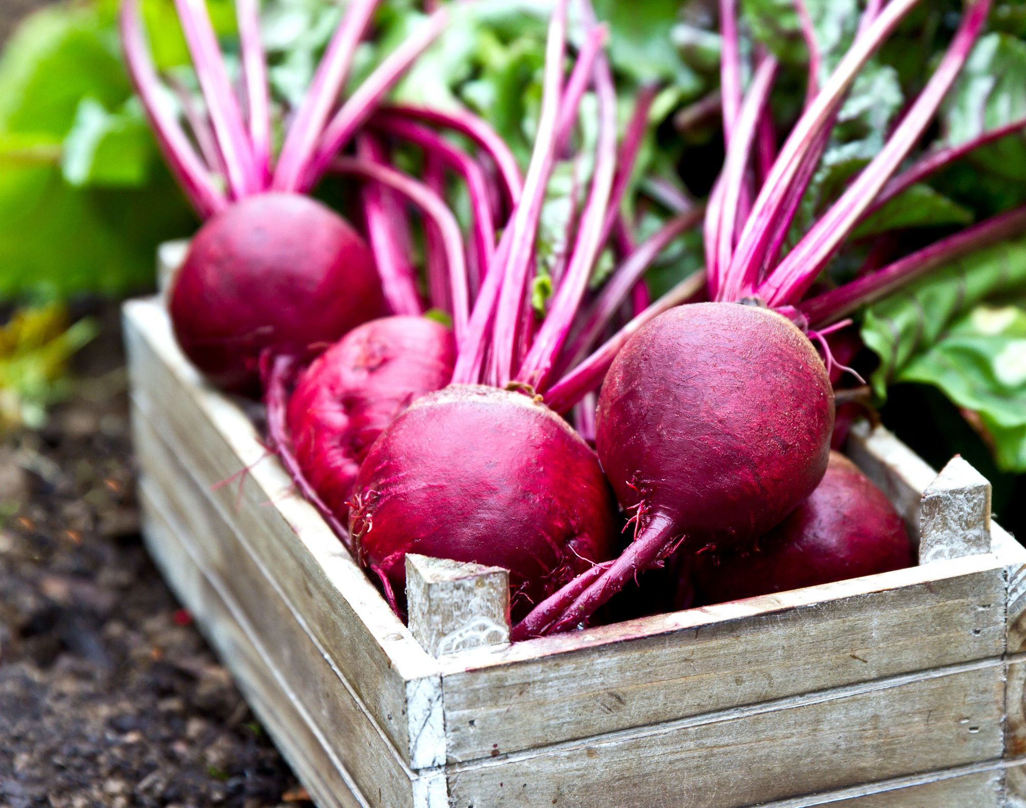 Why Do Beets Make Your Pee Turn Pink? - MyRecipes