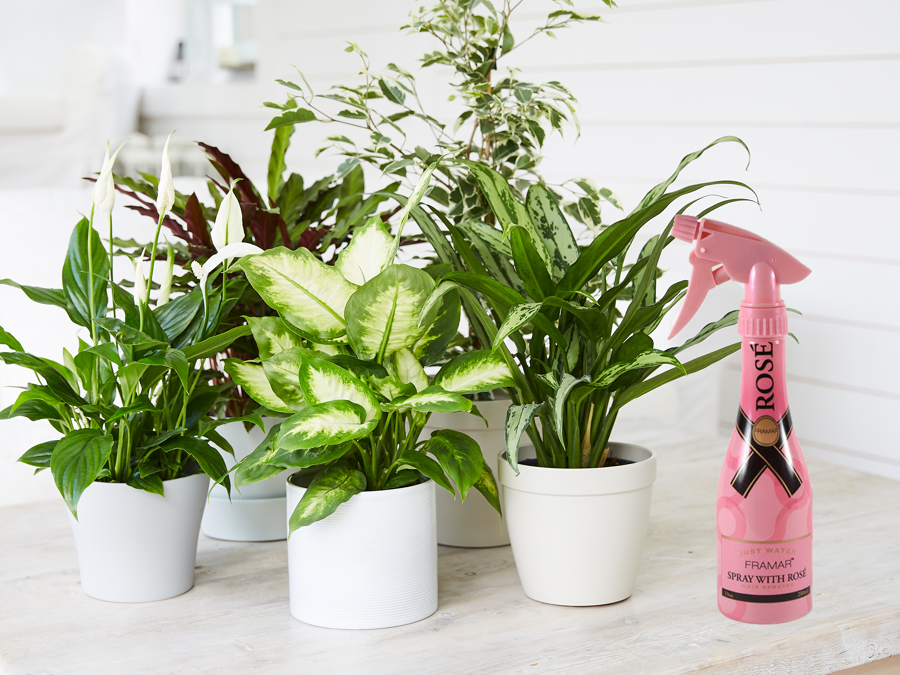Next Time You Water Your Plants, Spray with Rosé