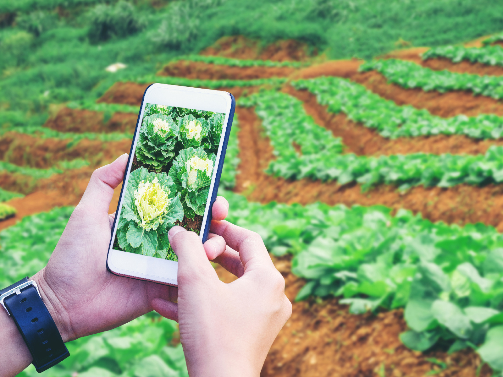 Some Farmers Are Making More Money on YouTubeThanfrom Their Farms