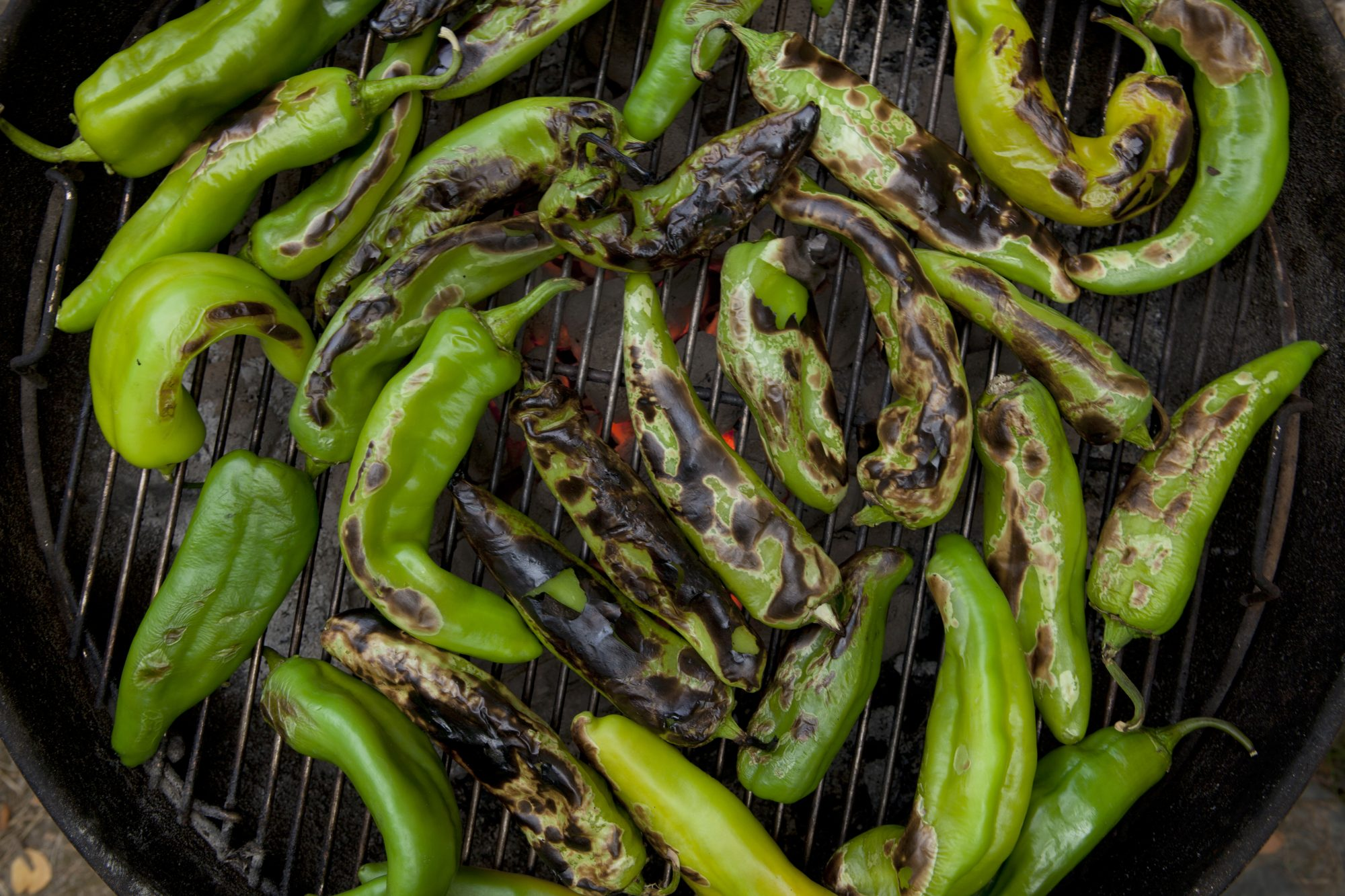 What is Hatch Chile?