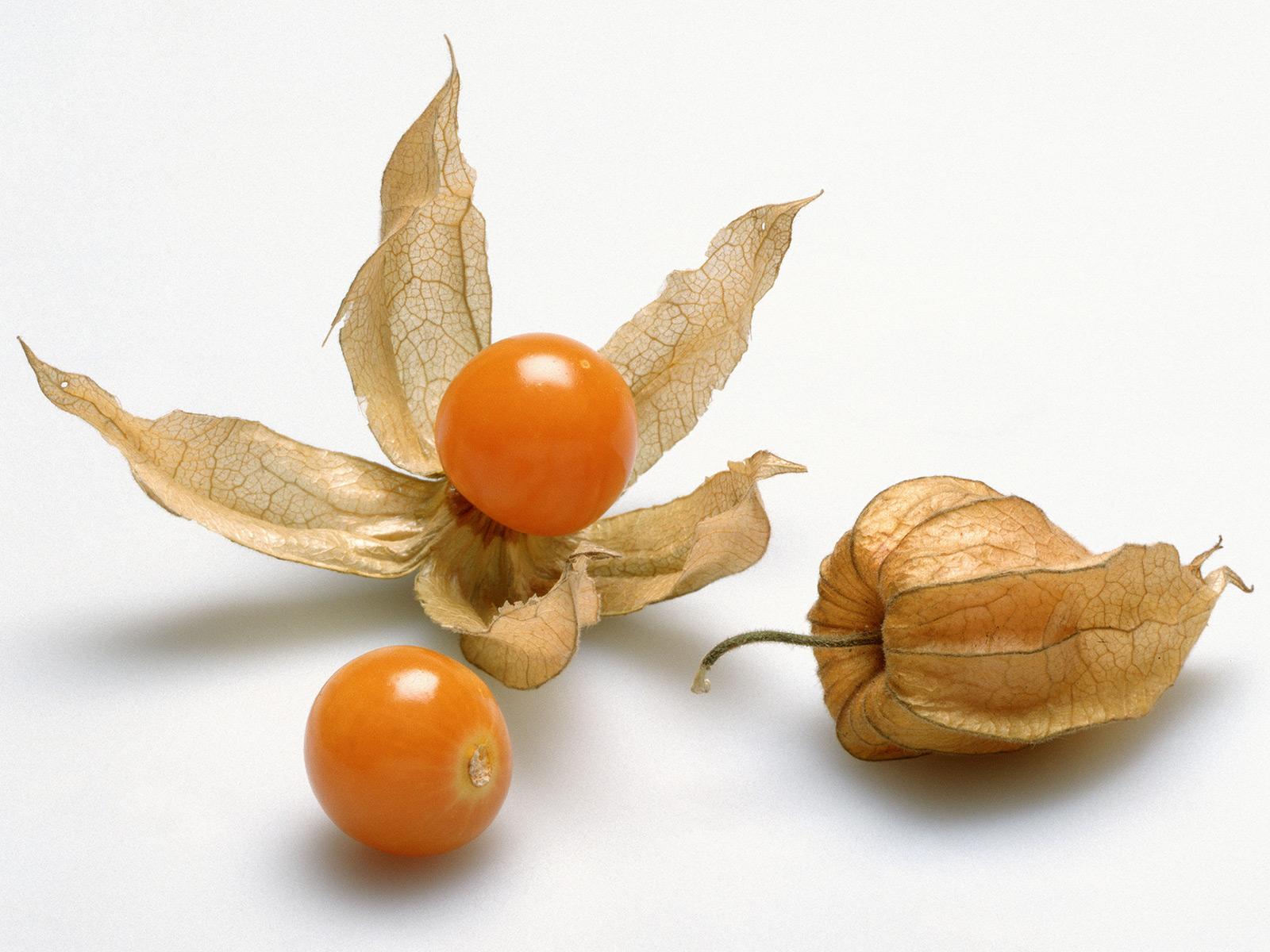 What are Ground Cherries?