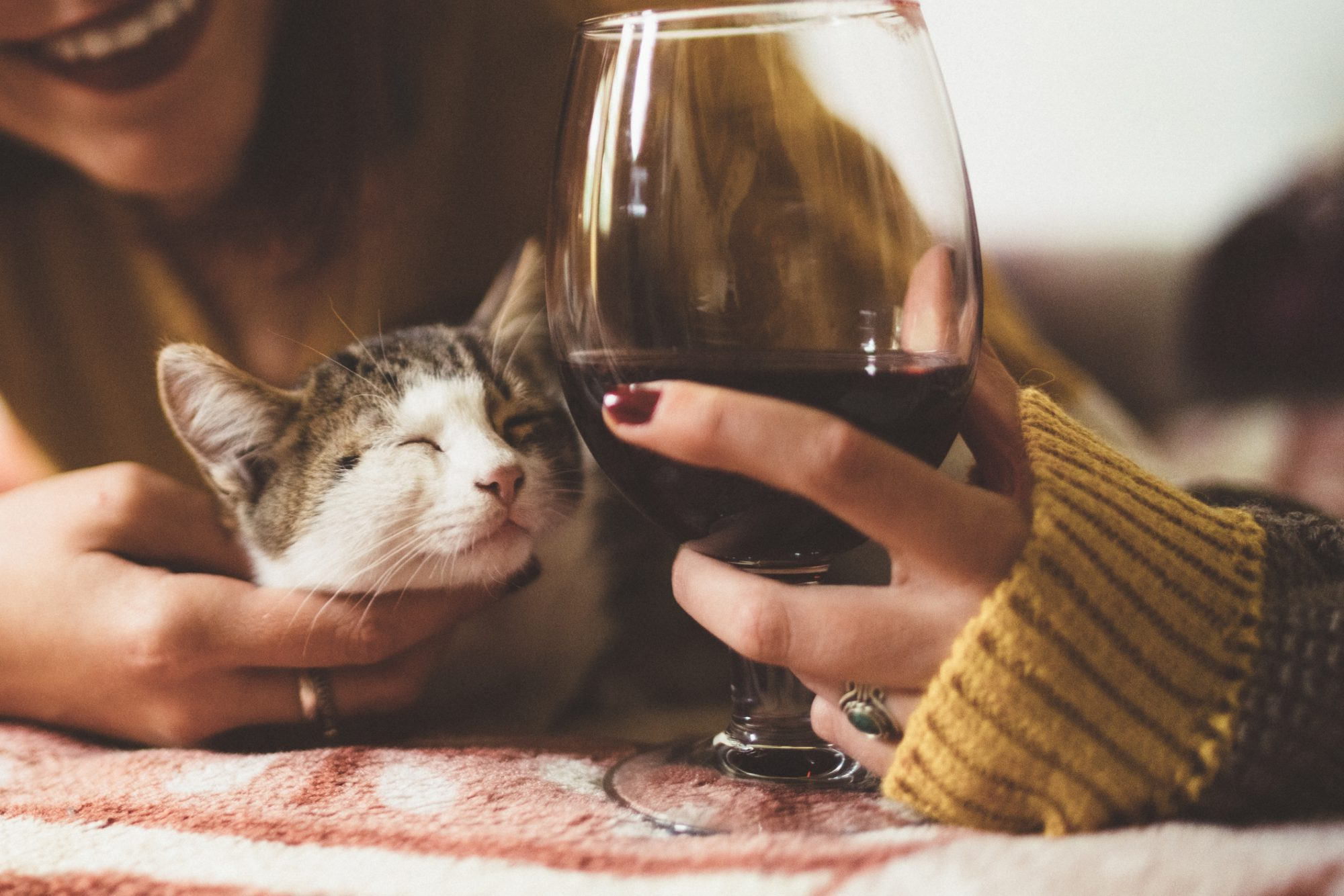 National Drink Wine With Your Cat Week Is an Arbitrary Holiday That Actually Matters