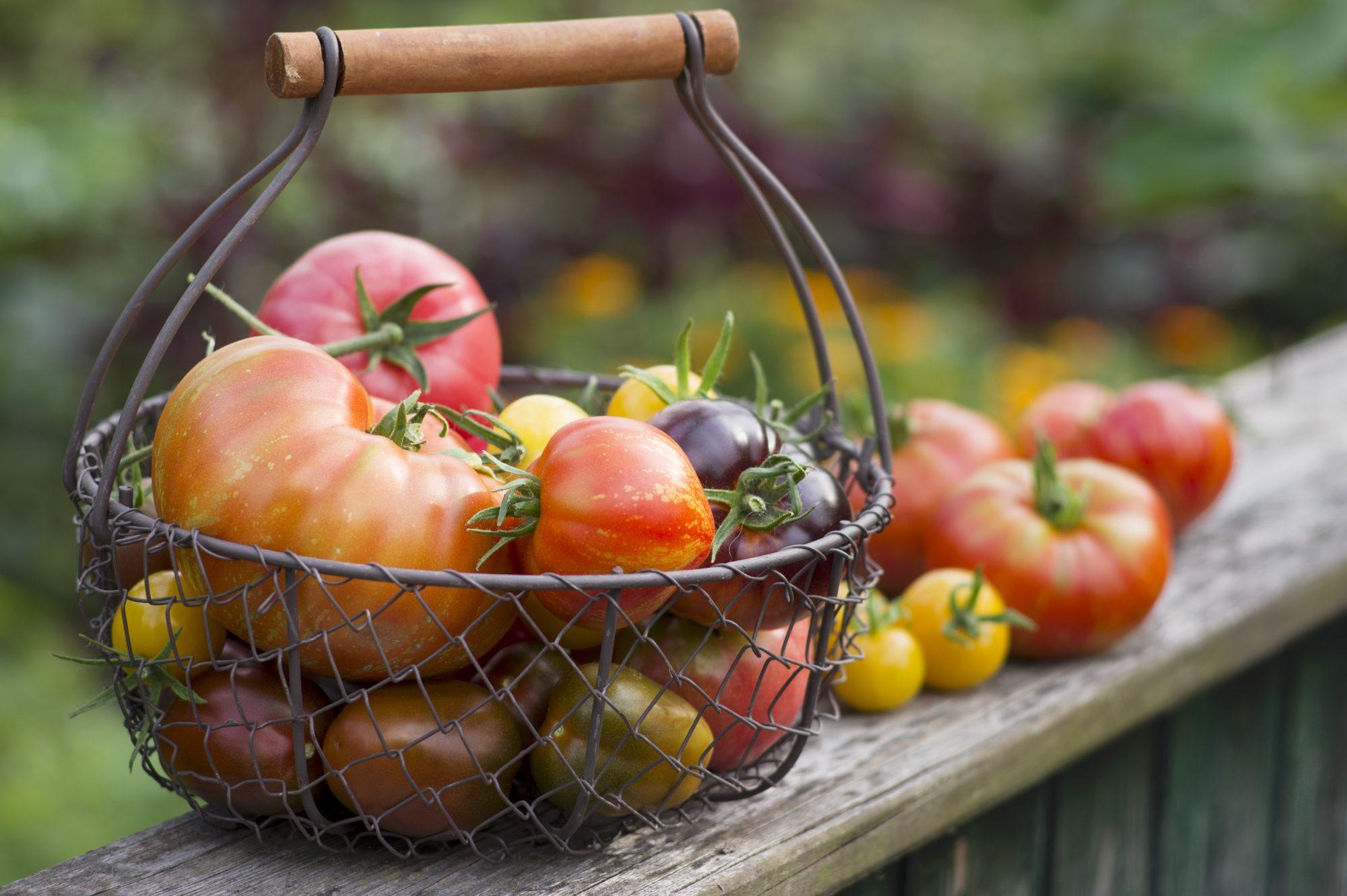 getty heirloom tomato image