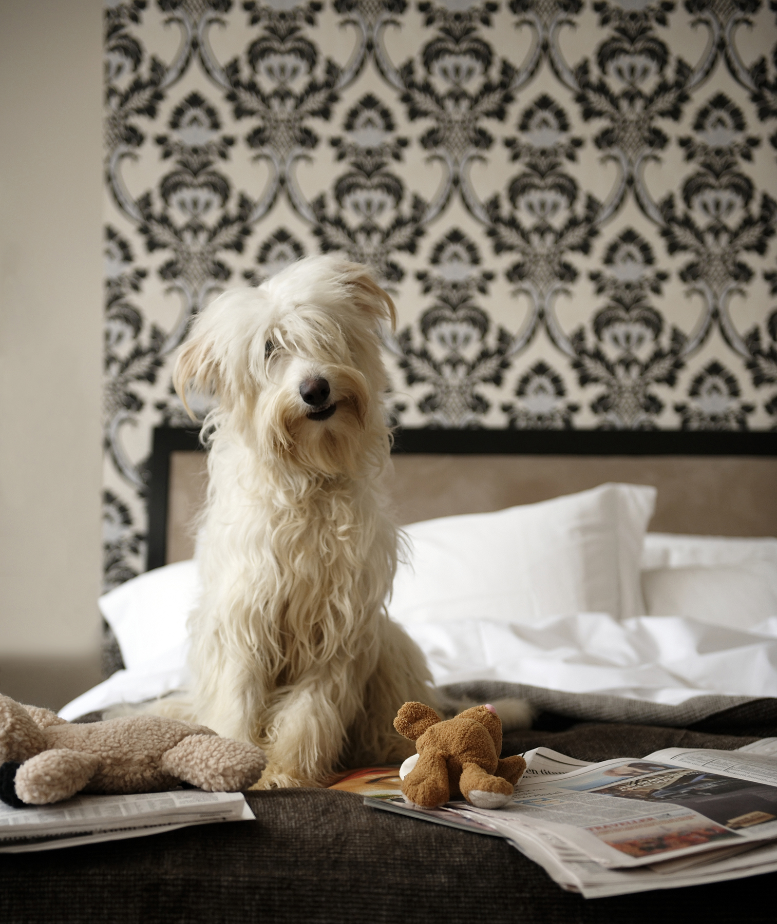 Dog sitting on bed in front of patterned wallpaper