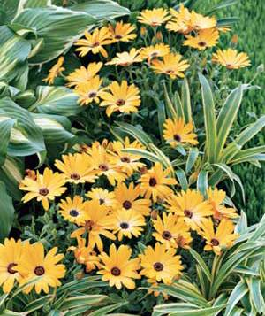 Flower plants and daisies
