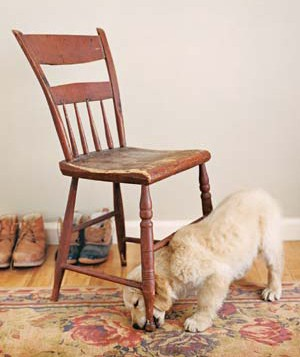 A puppy chewing a chair