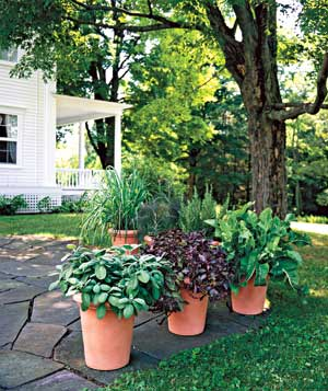 Use Potted Plants To Define An Outdoor E Here They Separate Patio From Lawn
