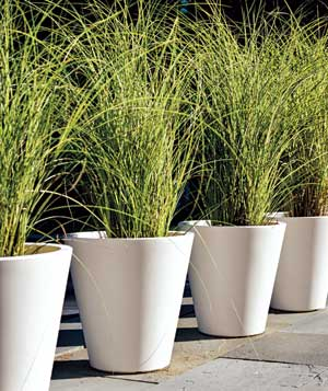 Outdoor plants in white pots