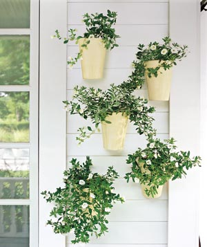 Mounted plants cheer up a bare wall. Hang an even number for a formal look, an odd number for a more relaxed feel.