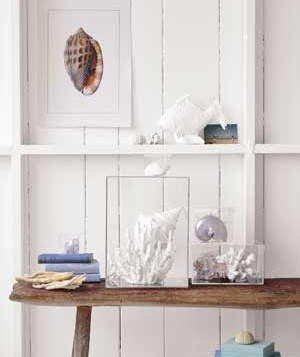 Decorative display including shells in Lucite boxes