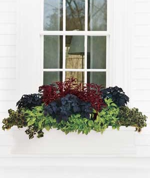 Flower box for a shady window