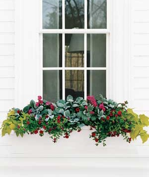 Flower Box For A Sunny Window