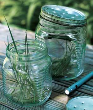 Blades of grass in a jar