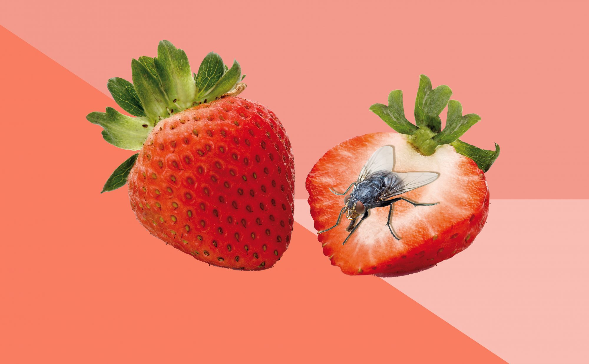 How to Get Rid of Fruit Flies Taking Over Your Kitchen Right Now
