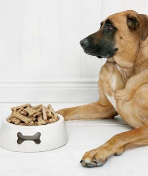 A pet dog sits near a bowl of food