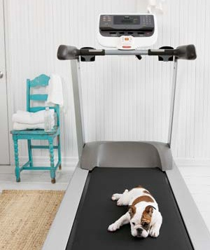 A pet dog sleeps on a treadmil
