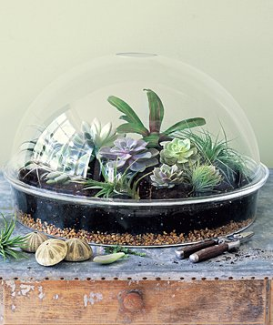 Multiple plants in a terrarium