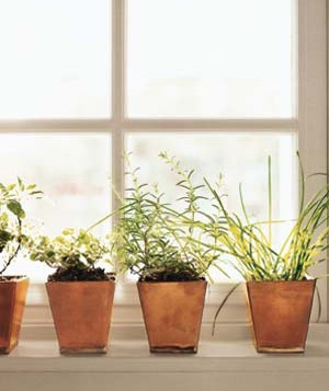 Herbs in flowerpots near a window