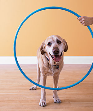 Dog and a hoop