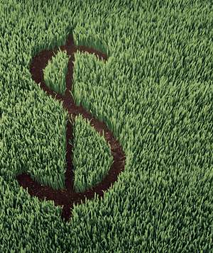 Dollar sign in grass
