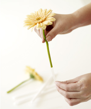 Gently slide flower into straw
