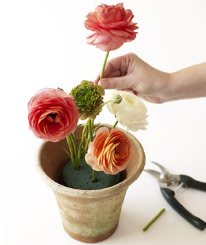 Push ranunculus into floral foam