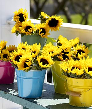 Sunflowers in colorful beach pails
