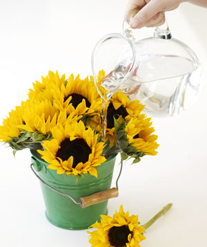Water sunflowers in green bucket